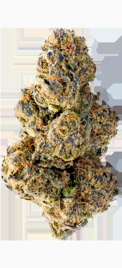Colossal Purps bud marijuana