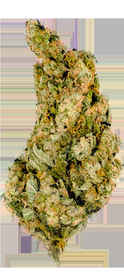 Giant Skittlez bud marijuana