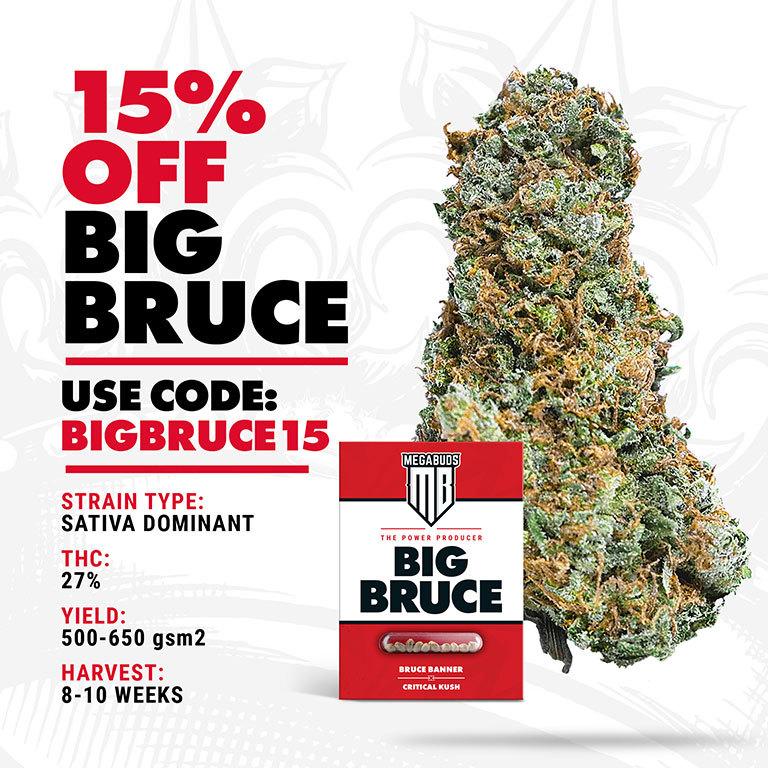15% off Big Bruce